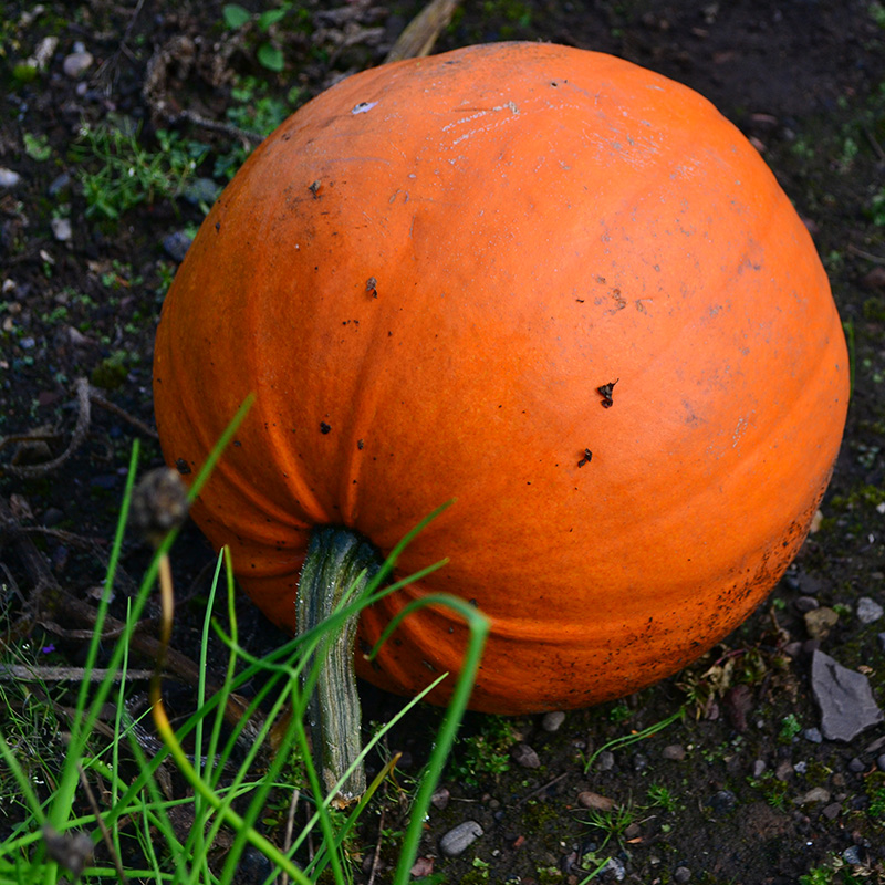 Autumn Celebrations: Day of the Dead, Diwali and Halloween